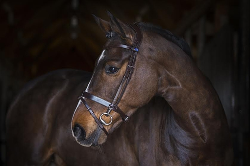 PS-of-Sweden-flat-out-revolution-bridle