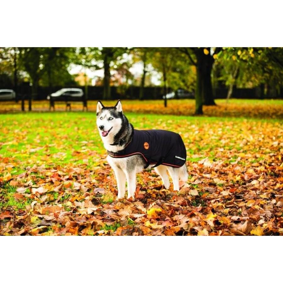 rambo-ionic-dog-rug