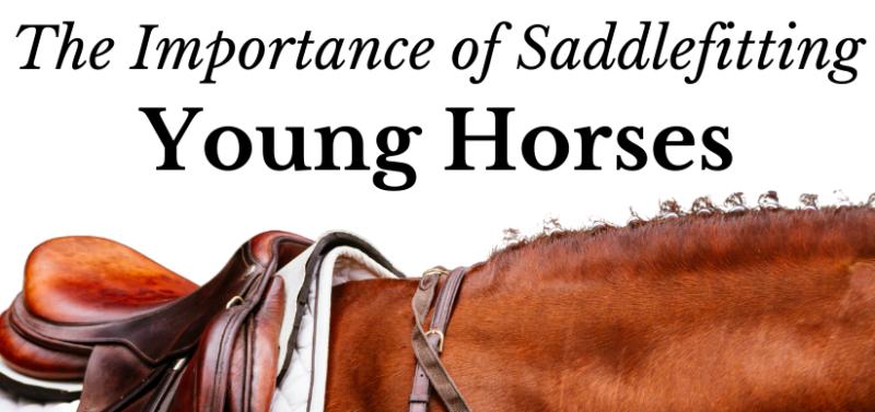 The importance of Saddlefitting young Horses